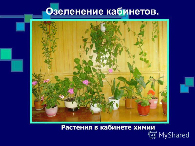 Растения в кабинете химии Озеленение кабинетов.