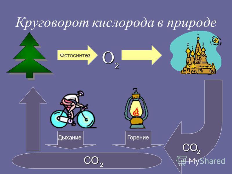 Круговорот кислорода в природе Фотосинтез О 2 СО 2 Дыхание Горение СО 2