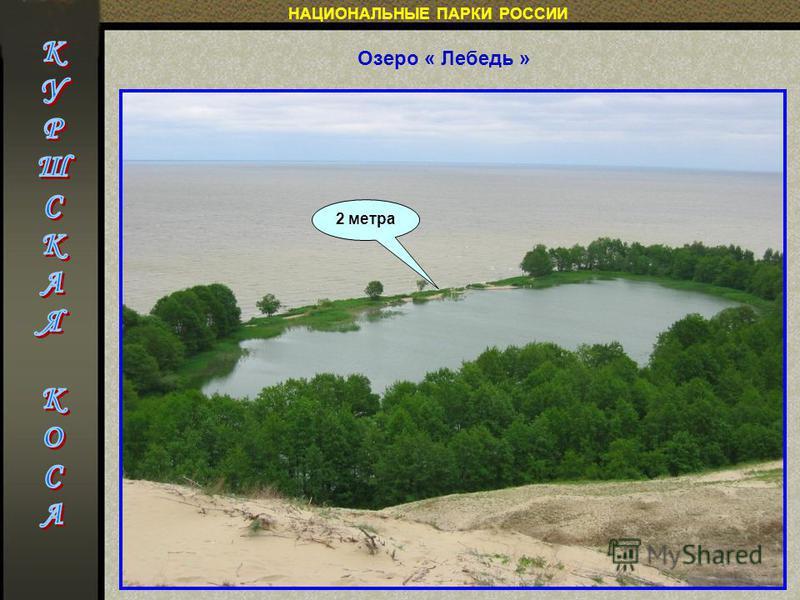 НАЦИОНАЛЬНЫЕ ПАРКИ РОССИИ Озеро « Лебедь » 2 метра