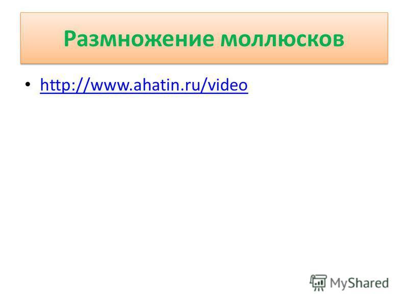 Размножение моллюсков http://www.ahatin.ru/video