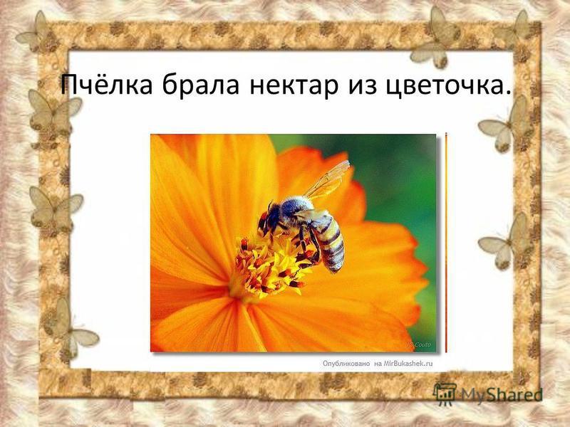 Пчёлка брала нектар из цветочка.
