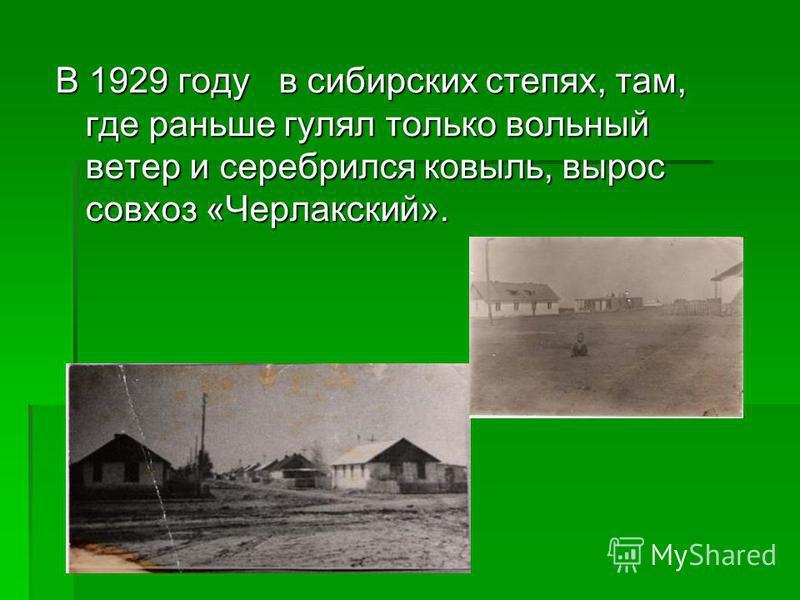 В 1929 году в сибирских степях, там, где раньше гулял только вольный ветер и серебрился ковыль, вырос совхоз «Черлакский».