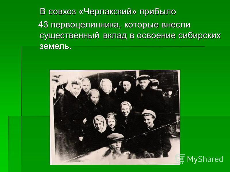 В совхоз «Черлакский» прибыло В совхоз «Черлакский» прибыло 43 первоцелинника, которые внесли существенный вклад в освоение сибирских земель. 43 первоцелинника, которые внесли существенный вклад в освоение сибирских земель.