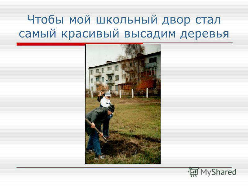 Чтобы мой школьный двор стал самый красивый высадим деревья