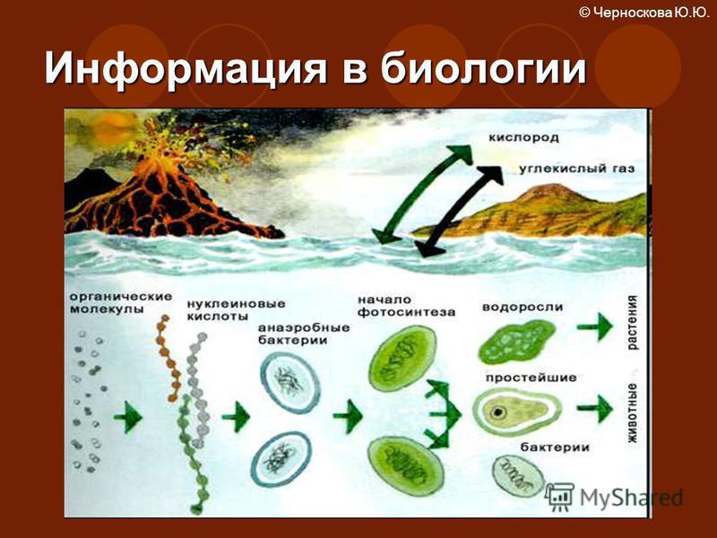 Информация в биологии © Черноскова Ю.Ю.