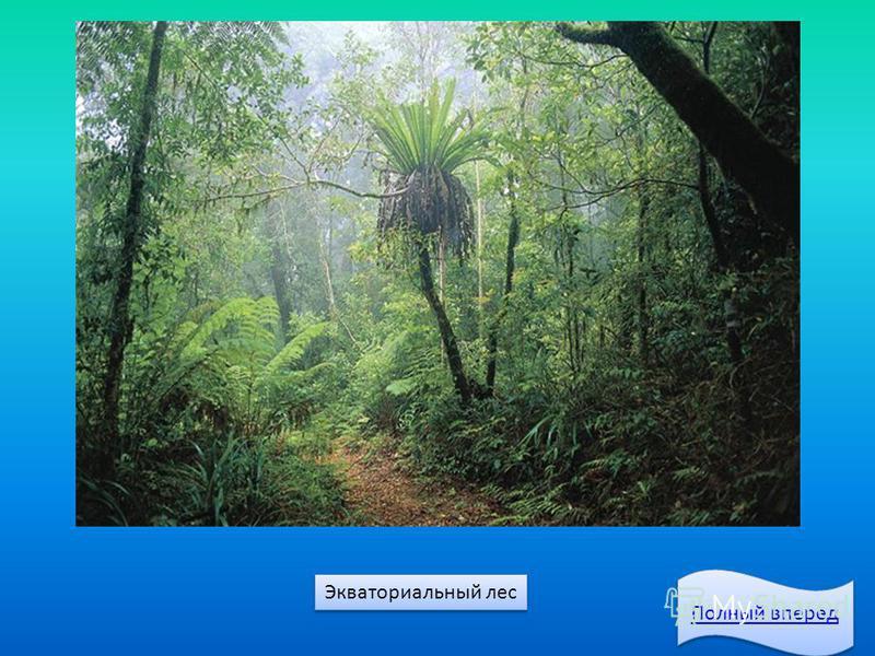 Экваториальный лес Полный вперед