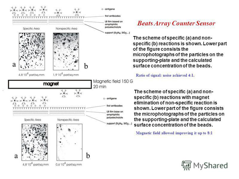 Beats Array Counter Sensor The scheme of specific (a) and non- specific (b) reactions is shown. Lower part of the figure consists the microphotographs of the particles on the supporting-plate and the calculated surface concentration of the beads. The