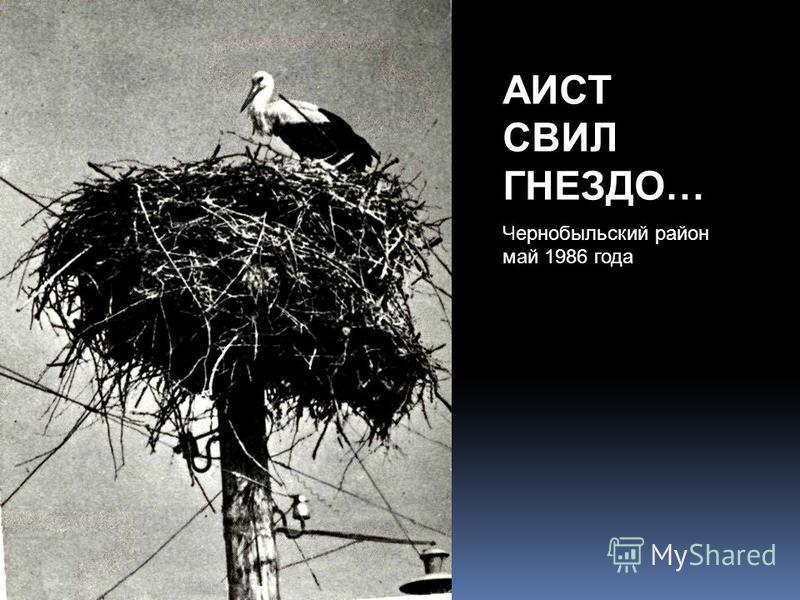 АИСТ СВИЛ ГНЕЗДО… Чернобыльский район май 1986 года