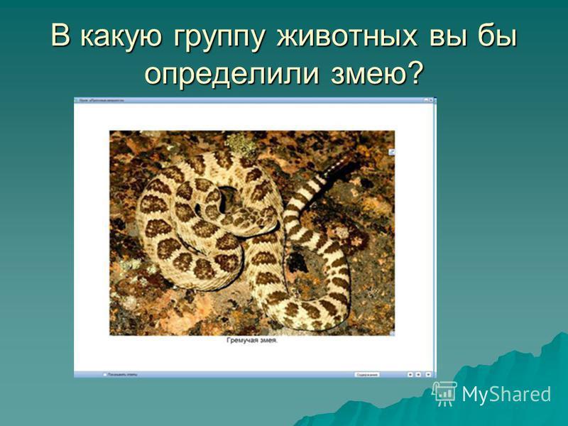 В какую группу животных вы бы определили змею?