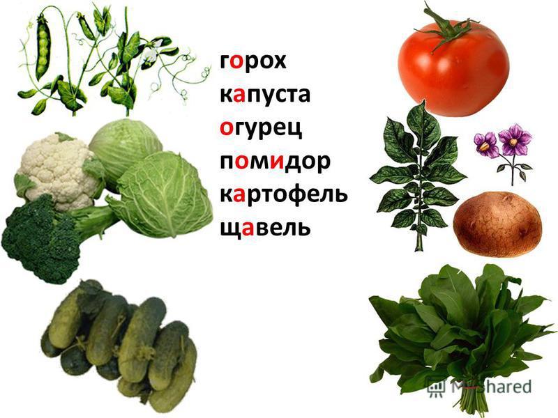 горох капуста огурец помидор картофель щавель