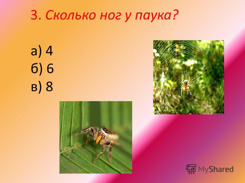 3. Сколько ног у паука? а) 4 б) 6 в) 8
