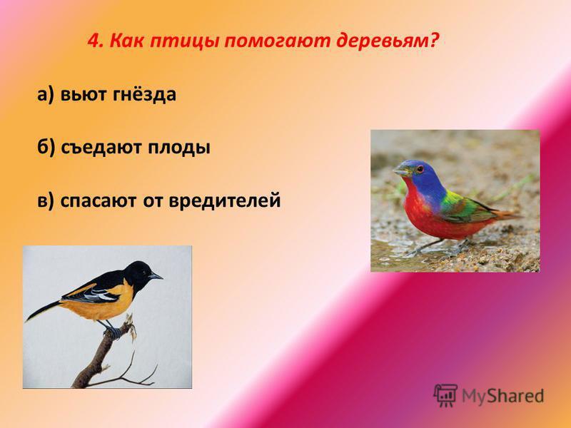 4. Как птицы помогают деревьям? а) вьют гнёзда б) съедают плоды в) спасают от вредителей