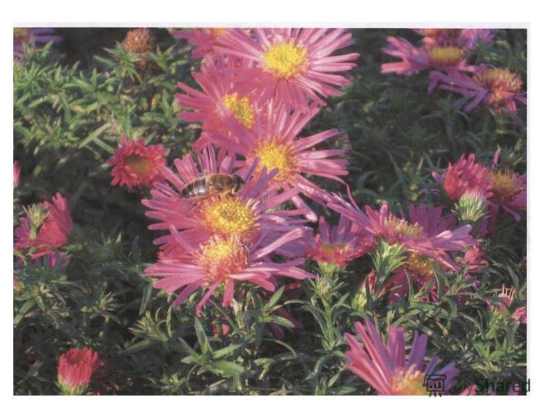 Цветы украшают луга и леса Но это не только природы краса- В них пчёлы находят целительный дар, И бабочки пьют из них сладкий нектар. Не надо, друзья, их бессмысленно рвать, Не надо букеты из них составлять… Завянут букеты…Погибнут цветы… И больше не