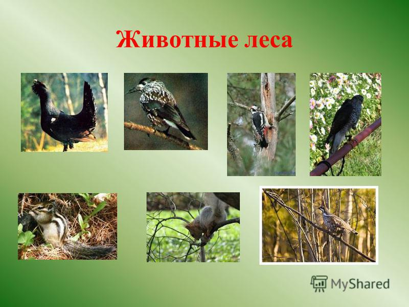 Животные леса