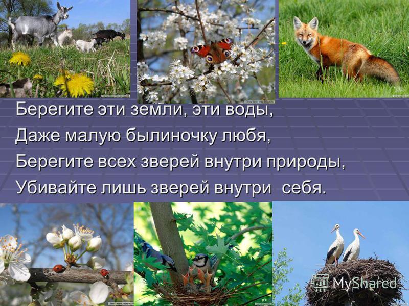 Берегите эти земли, эти воды, Даже малую былиночку любя, Берегите всех зверей внутри природы, Убивайте лишь зверей внутри себя.