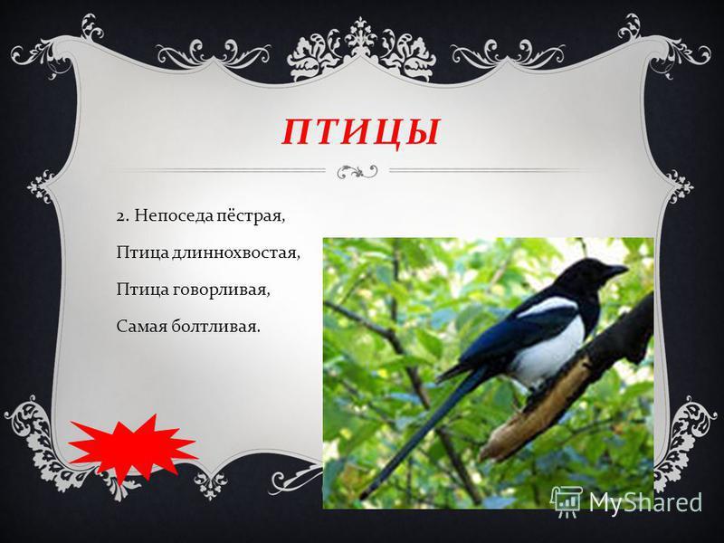 ПТИЦЫ 2. Непоседа пёстрая, Птица длиннохвостая, Птица говорливая, Самая болтливая.