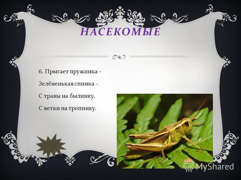 НАСЕКОМЫЕ 6. Прыгает пружинка – Зелёненькая спинка – С травы на былинку, С ветки на тропинку.