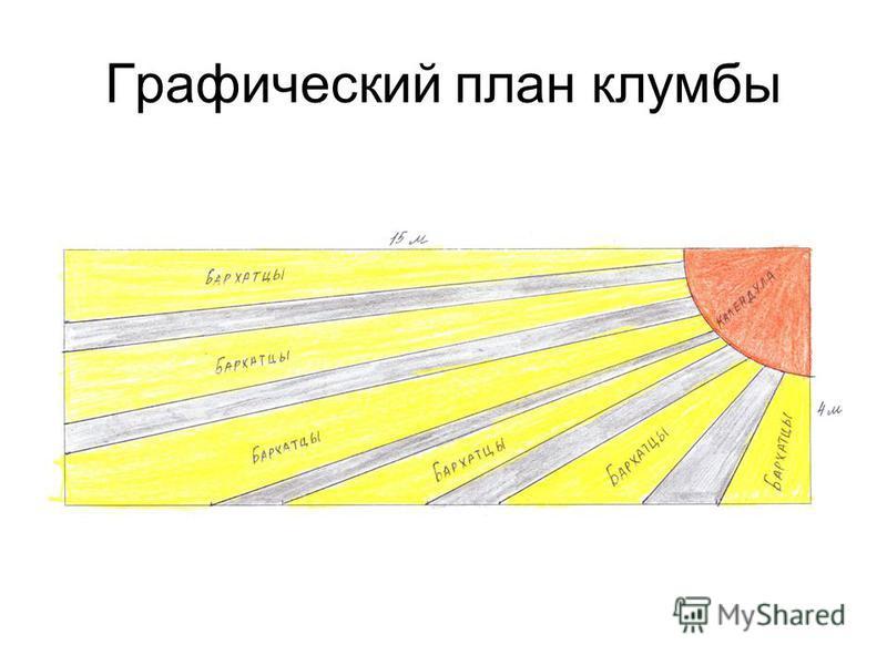 Графический план клумбы