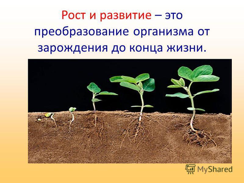 Рост и развитие – это преобразование организма от зарождения до конца жизни.