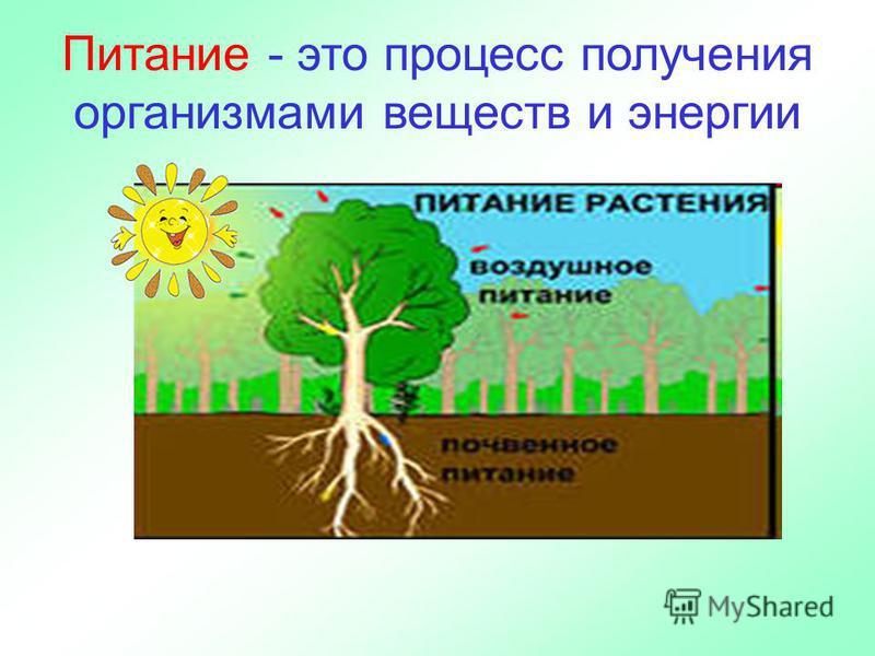 Питание - это процесс получения организмами веществ и энергии