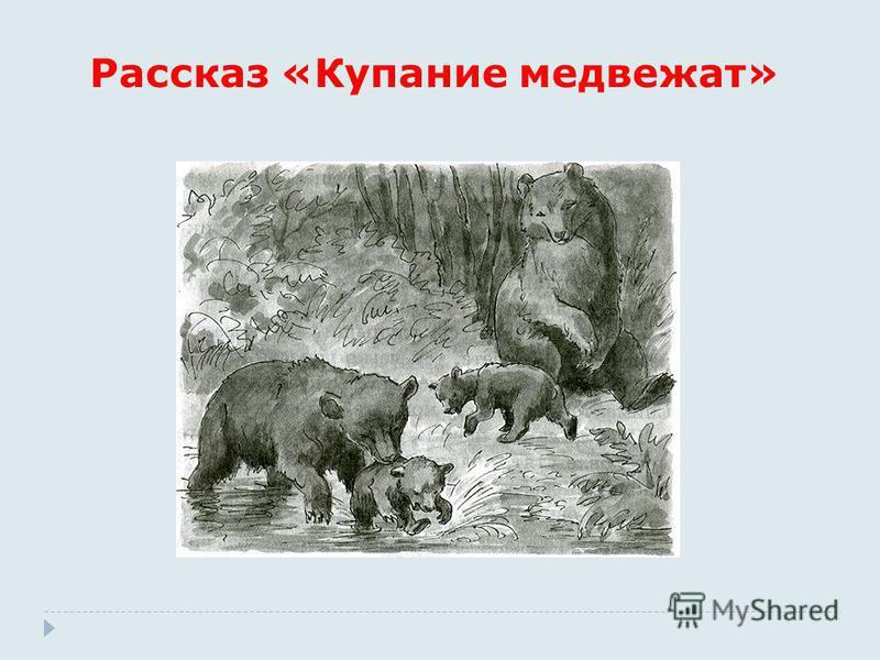 Рассказ «Купание медвежат»