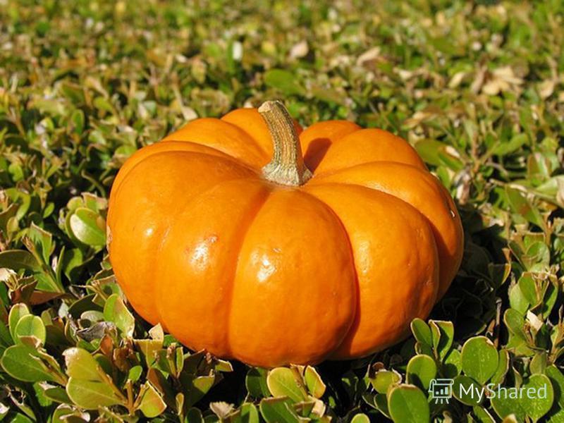 В огороде - жёлтый мяч. Только не бежит он вскачь, Он как полная луна. Вкусные в нём семена.