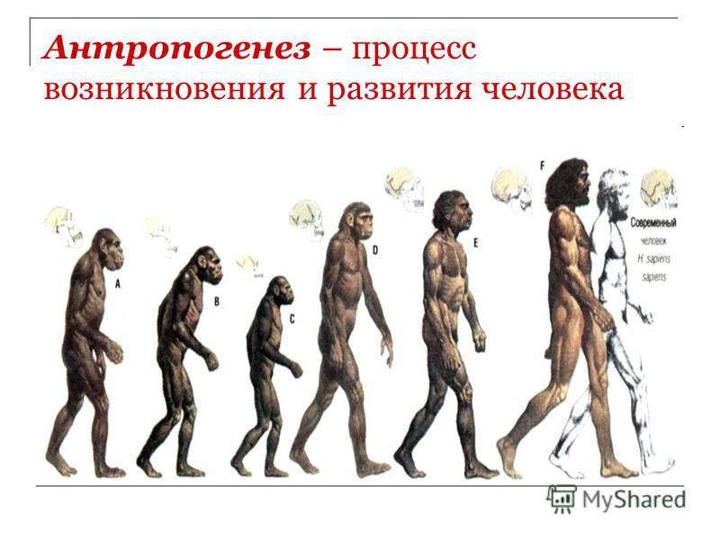 Антропогенез – процесс возникновения и развития человека