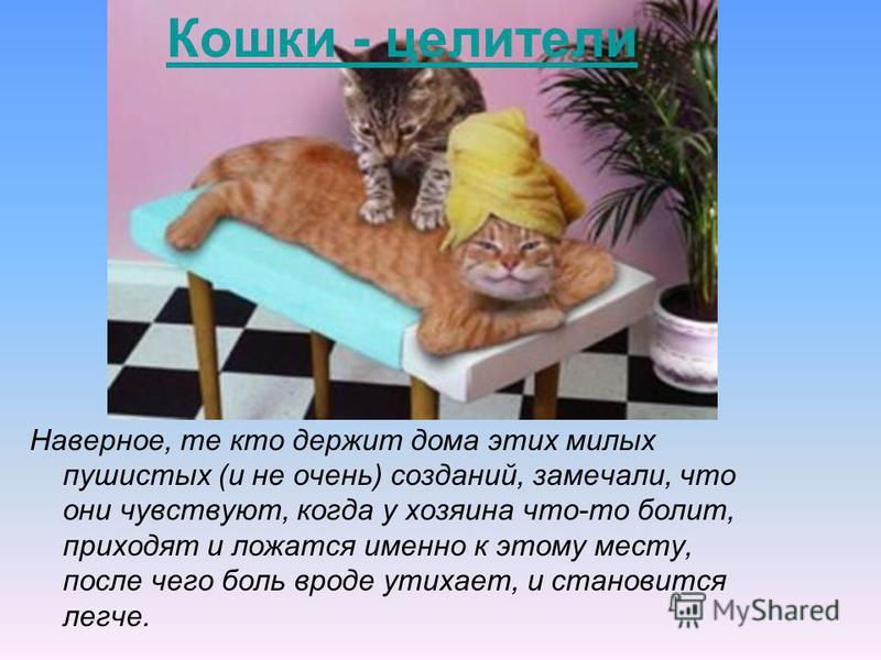 Кошки - целители Наверное, те кто держит дома этих милых пушистых (и не очень) созданий, замечали, что они чувствуют, когда у хозяина что-то болит, приходят и ложатся именно к этому месту, после чего боль вроде утихает, и становится легче.