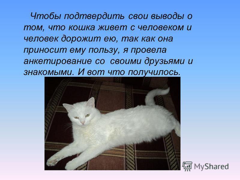 Чтобы подтвердить свои выводы о том, что кошка живет с человеком и человек дорожит ею, так как она приносит ему пользу, я провела анкетирование со своими друзьями и знакомыми. И вот что получилось.