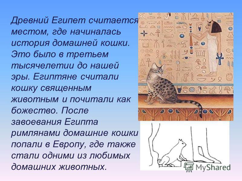 Древний Египет считается местом, где начиналась история домашней кошки. Это было в третьем тысячелетии до нашей эры. Египтяне считали кошку священным животным и почитали как божество. После завоевания Египта римлянами домашние кошки попали в Европу,