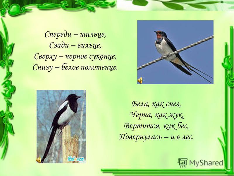 Спереди – шильце, Сзади – вильце, Сверху – черное суконце, Снизу – белое полотенце. Бела, как снег, Черна, как жук, Вертится, как бес, Повернулась – и в лес.