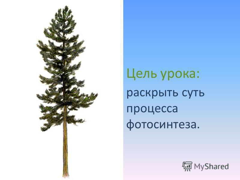 Цель урока: раскрыть суть процесса фотосинтеза.