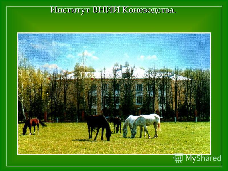 Институт ВНИИ Коневодства.