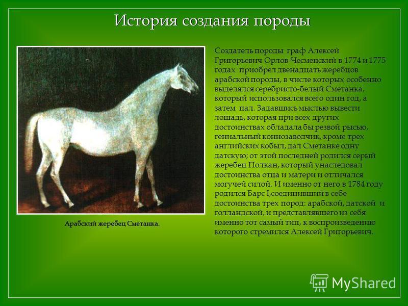 Создатель породы граф Алексей Григорьевич Орлов-Чесменский в 1774 и 1775 годах приобрел двенадцать жеребцов арабской породы, в числе которых особенно выделялся серебристо-белый Сметанка, который использовался всего один год, а затем пал. Задавшись мы