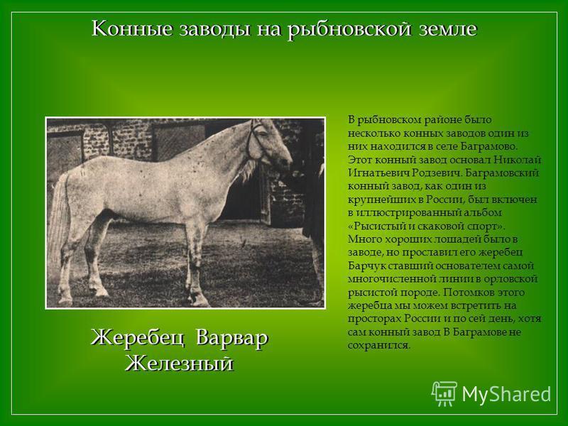 Конные заводы на рыбновской земле В рыбновском районе было несколько конных заводов один из них находился в селе Баграмово. Этот конный завод основал Николай Игнатьевич Родзевич. Баграмовский конный завод, как один из крупнейших в России, был включен