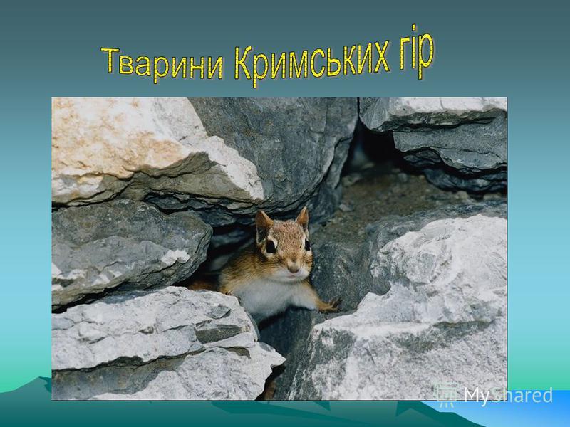 Гольян озерний (Phxinus percnurus)