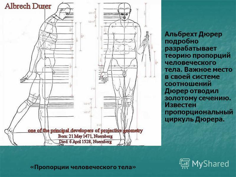 Альбрехт Дюрер подробно разрабатывает теорию пропорций человеческого тела. Важное место в своей системе соотношений Дюрер отводил золотому сечению. Известен пропорциональный циркуль Дюрера. «Пропорции человеческого тела»