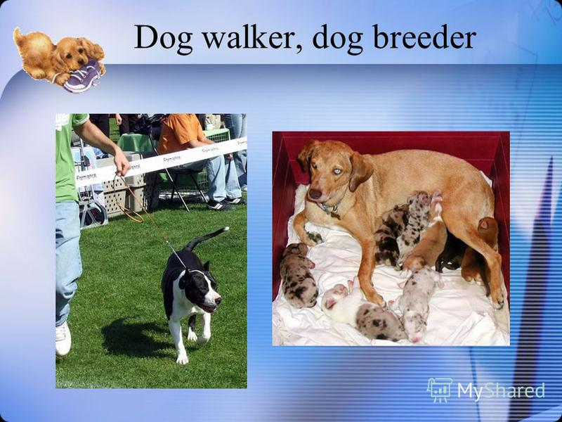 Dog walker, dog breeder
