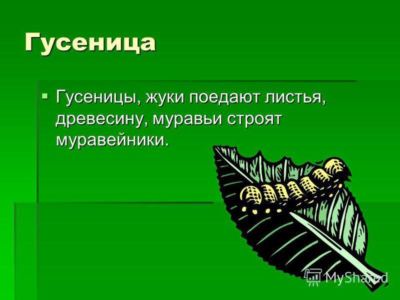 Гусеница Гусеницы, жуки поедают листья, древесину, муравьи строят муравейники. Гусеницы, жуки поедают листья, древесину, муравьи строят муравейники.