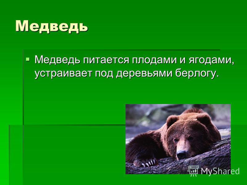 Медведь Медведь питается плодами и ягодами, устраивает под деревьями берлогу. Медведь питается плодами и ягодами, устраивает под деревьями берлогу.