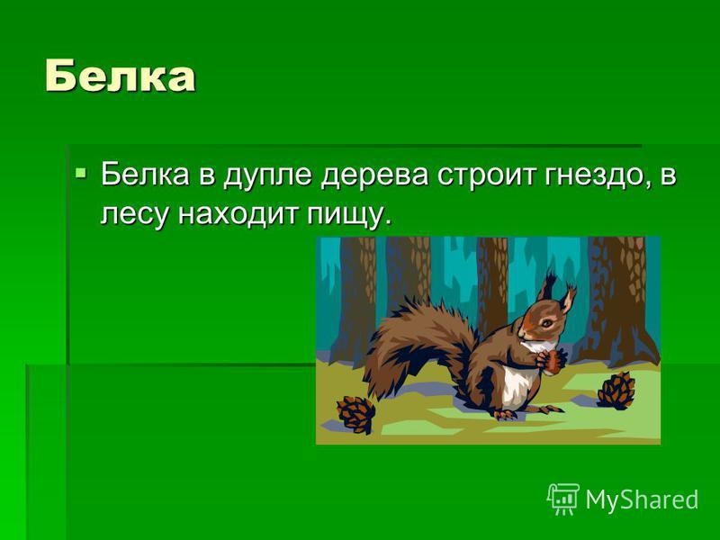Белка Белка в дупле дерева строит гнездо, в лесу находит пищу. Белка в дупле дерева строит гнездо, в лесу находит пищу.