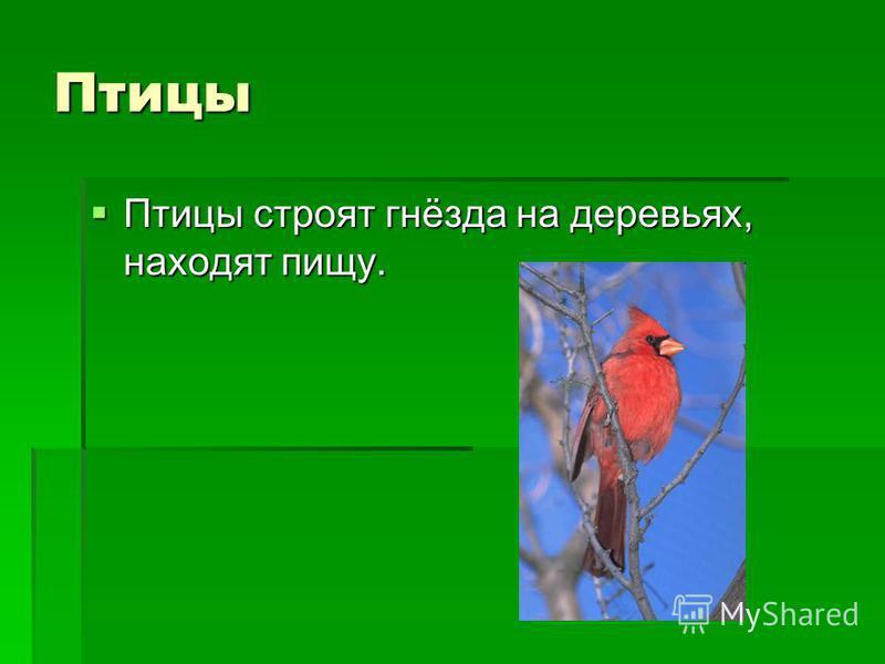 Птицы Птицы строят гнёзда на деревьях, находят пищу. Птицы строят гнёзда на деревьях, находят пищу.