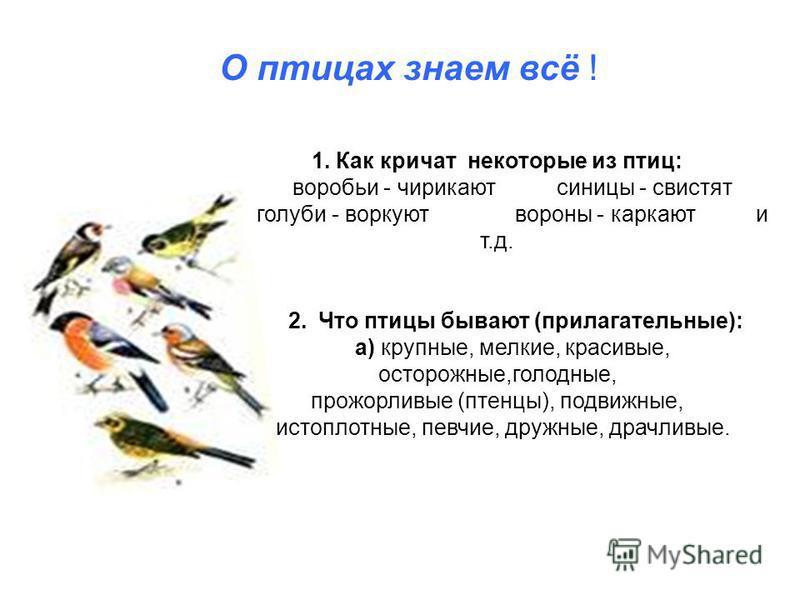 1. Как кричат некоторые из птиц: воробьи - чирикают синицы - свистят голуби - воркуют вороны - каркают и т.д. 2. Что птицы бывают (прилагательные): а) крупные, мелкие, красивые, осторожные,голодные, прожорливые (птенцы), подвижные, чистоплотные, певч