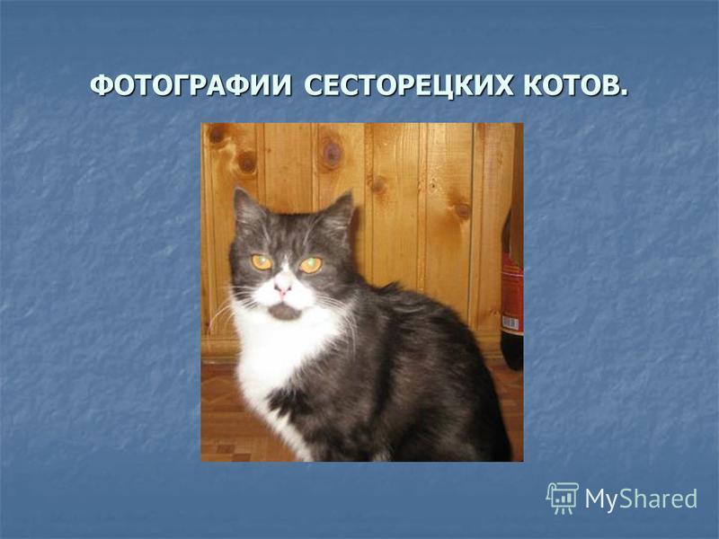 ФОТОГРАФИИ СЕСТОРЕЦКИХ КОТОВ.