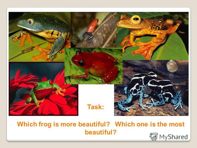 Task: Which frog is more beautiful? Which one is the most beautiful?