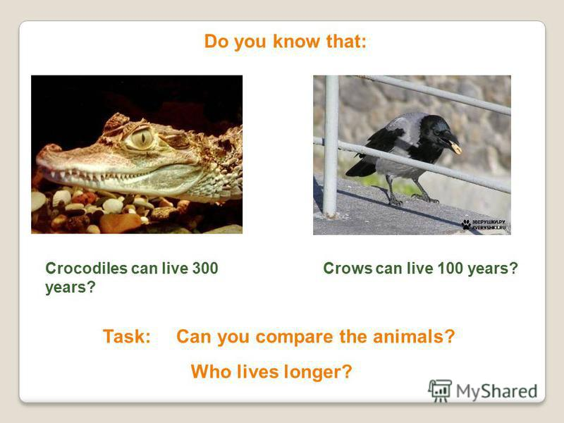 Do you know that: Crocodiles can live 300 years? Crows can live 100 years? Task: Can you compare the animals? Who lives longer?