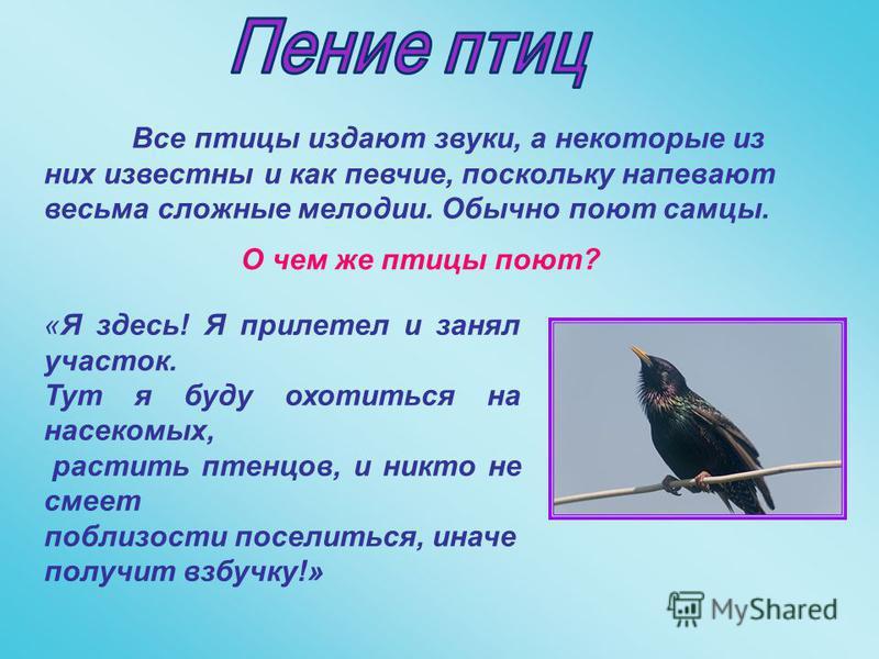 Все птицы издают звуки, а некоторые из них известны и как певчие, поскольку напевают весьма сложные мелодии. Обычно поют самцы. «Я здесь! Я прилетел и занял участок. Тут я буду охотиться на насекомых, растить птенцов, и никто не смеет поблизости посе