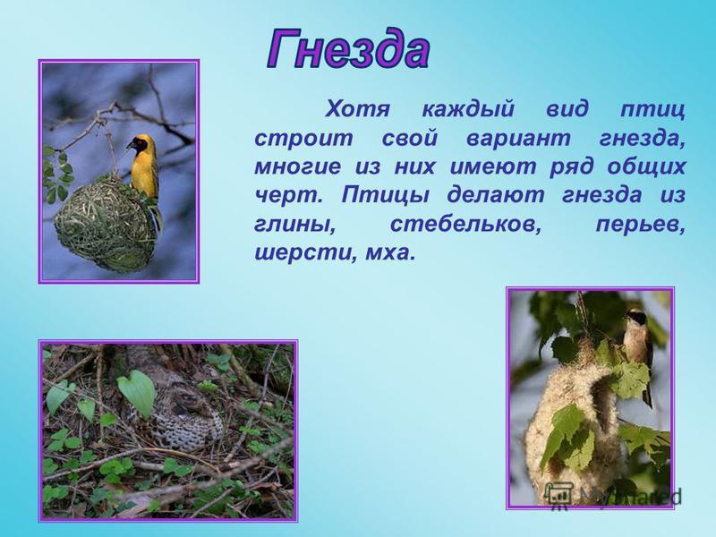Хотя каждый вид птиц строит свой вариант гнезда, многие из них имеют ряд общих черт. Птицы делают гнезда из глины, стебельков, перьев, шерсти, мха.