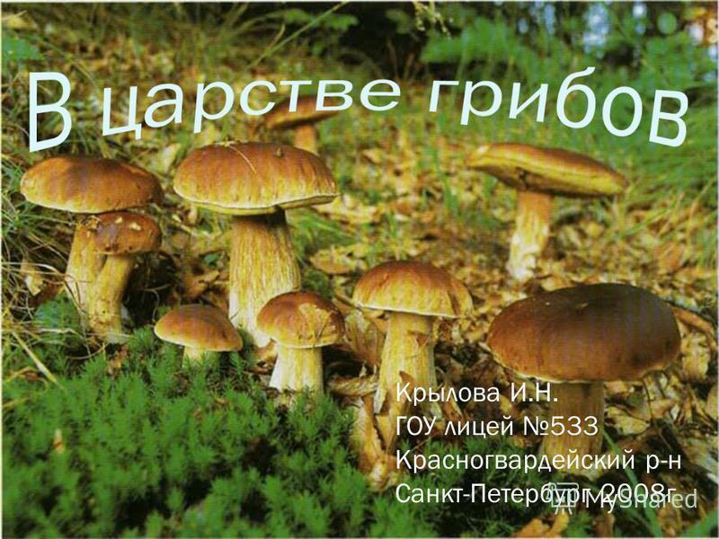 Крылова И.Н. ГОУ лицей 533 Красногвардейский р-н Санкт-Петербург 2008 г