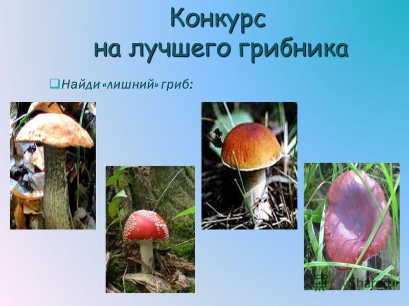Конкурс на лучшего грибника Найди «лишний» гриб: